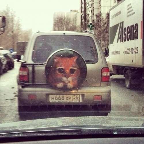 Веселі фото приколи про автомобілі