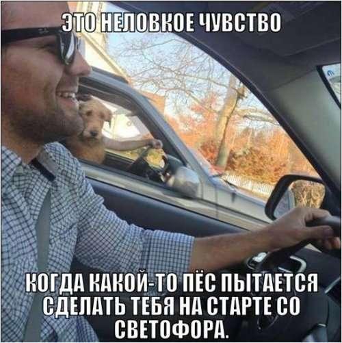 Свіжі автомобільні приколи серпня